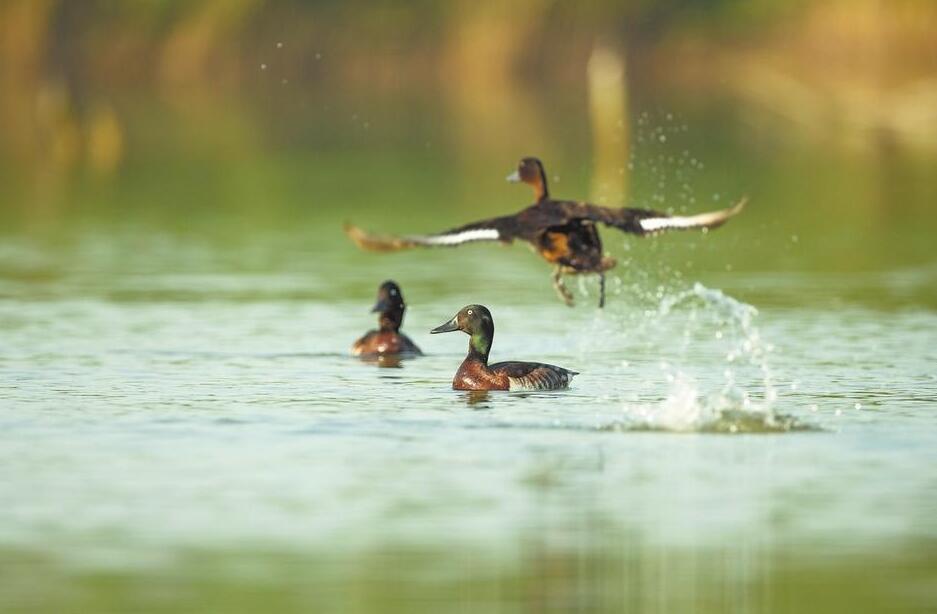 重点野生动植物保护率达95% 河南是全国生物多样性最丰富省份之一