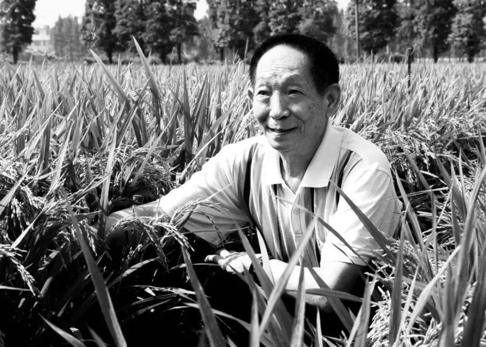 纪念|袁隆平生命中的三株稻子